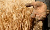 World Food Prices Hit 10-Year Peak: FAO