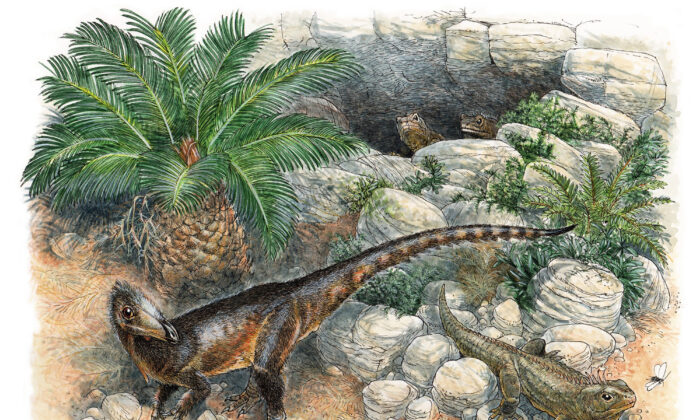 An undated illustration of the oldest known meat-eating dinosaur from the UK—a chicken sized animal that would have been one meter (3 feet) long with its tail. (James Robbins/Natural History Museum via PA)