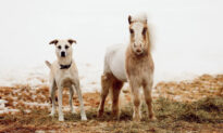 'It's Really Special': Rescued Mini Horse and Dog Share an Incredible Bond With Each Other