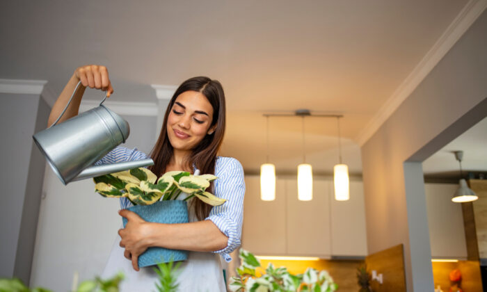 It's best to bring in outdoor plants while the outdoor and indoor temperatures are close to the same, rather than waiting until the last minute, so plan accordingly. (Dragana Gordic/Shutterstock)