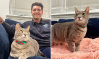 Firefighter Adopts Cat Rescued from Burning Shelter: 'I Signed Papers Right Then and There'