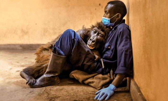 (Courtesy of Brent Stirton/Virunga National Park)