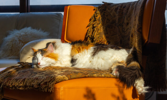 """One reader's dilemma: """"Several months ago, her cat relieved itself on the sofa, and I mean more than once. Mom has tried everything she can think of to get the odor out."""" (Augusto Martinez Paredes/Shutterstock)"""