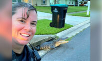 Police Officer's Selfie 'Photobombed' by Smiling Alligator Stuck in Storm Drain in Florida