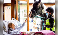 Dying Woman Bids Beloved Horse and Dogs Goodbye as Hospice Staff Bring Them to Her Bedside
