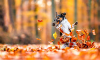 Comedy Pet Photography Awards 2021 Releases Finalist Photos—And They're Hilarious