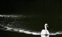 Rare Bird-Flu Outbreak Jumps to Mammals at Wildlife Center