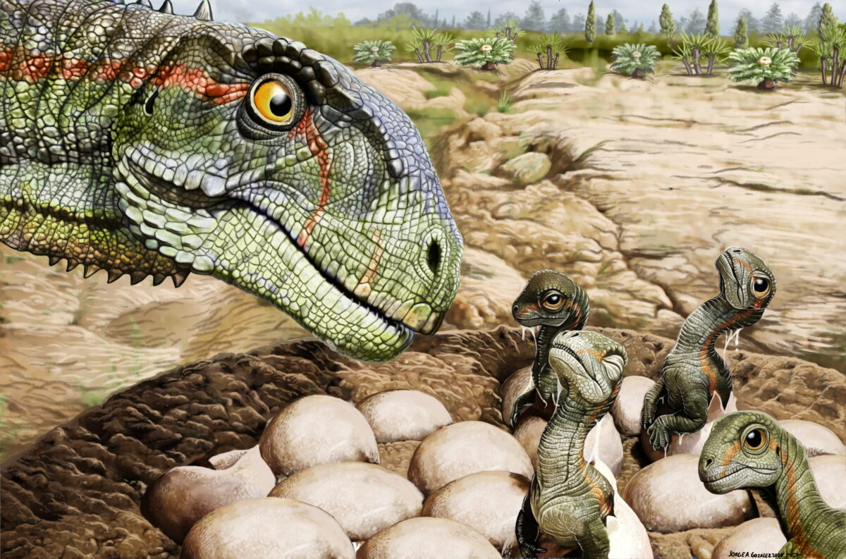 Patagonian Fossils Show Jurassic Dinosaur Had the Herd Mentality - The Epoch Times