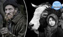 Photos: 15-Year Project Showcases Humble Bonds of Transylvanian Shepherds and Their Herds