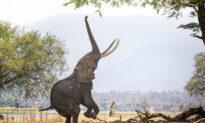 Zimbabwe: Your Dream Safari