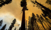 About 10,000 Trees to Be Removed After California Wildfire