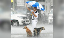 Photo Shows 2 Soaking-Wet Dogs in the Rain, Traffic Officer Sheltering Them Under His Umbrella
