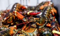 China-Linked Twitter Accounts Claim COVID-19 Came From Maine Lobsters