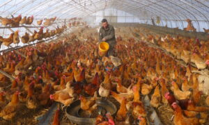 Rise in Human Bird Flu Cases in China Shows Risk of Fast-Changing Variants: Health Experts