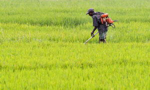 Sri Lanka Finds Chinese Fertilizer Contaminated, Orders Indian One