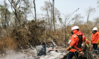 China's Beef Demand in Bolivia Drives Deforestation and Wildfires