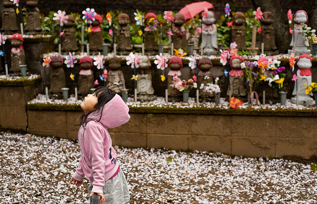 A little girl in Japan looks up at the cherry blossoms. (Clint/flickr)