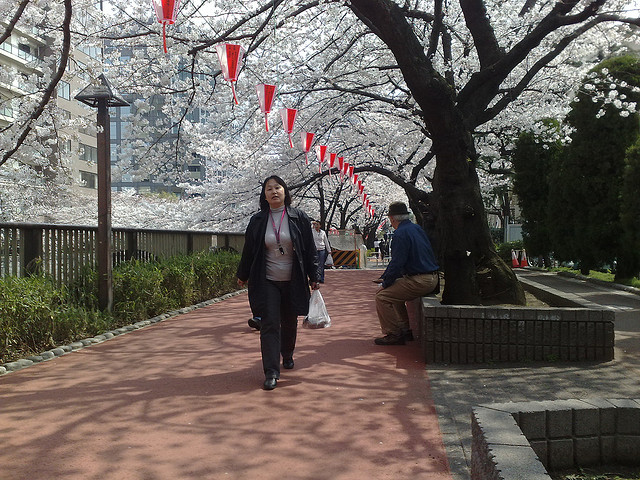 Walking along a footpath under the cherry blossom trees in Tokyo, Japan. (LonelyBob, flickr)