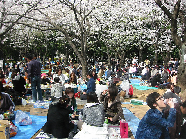 Yoyogi Park in Tokyo, Japan is one of the most popular spots in the country for cherry blossom viewing. (Stardog Champion/flickr)